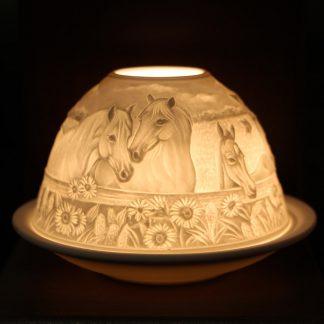 Kærleiksljós - hestar